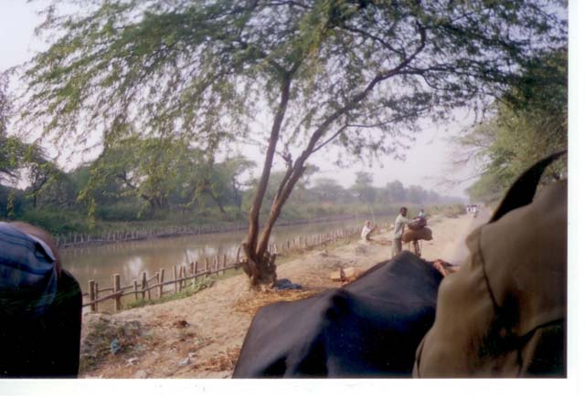 View from the bullock cart on the ride