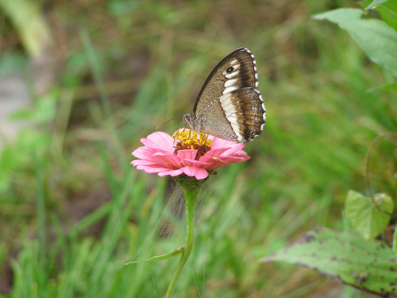 Flora @ Fauna combined