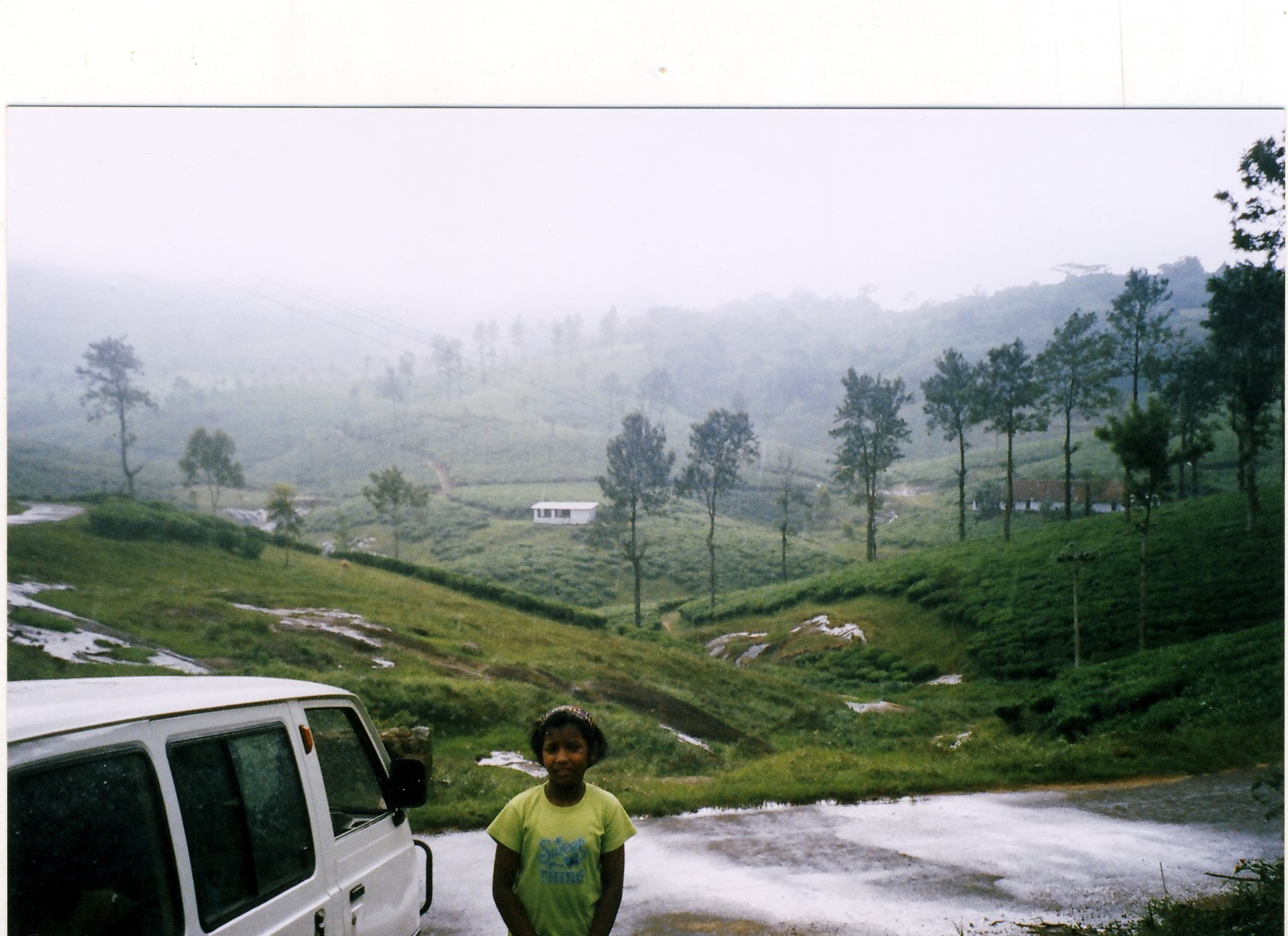 Drizzling in tea garden