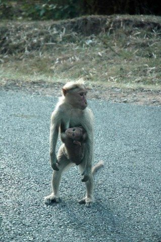 Monkey and the baby crossing road