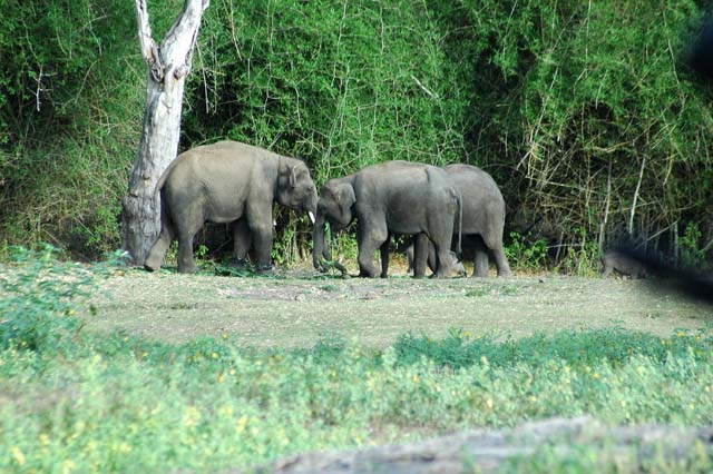 Group of Elephants, just on the side of road