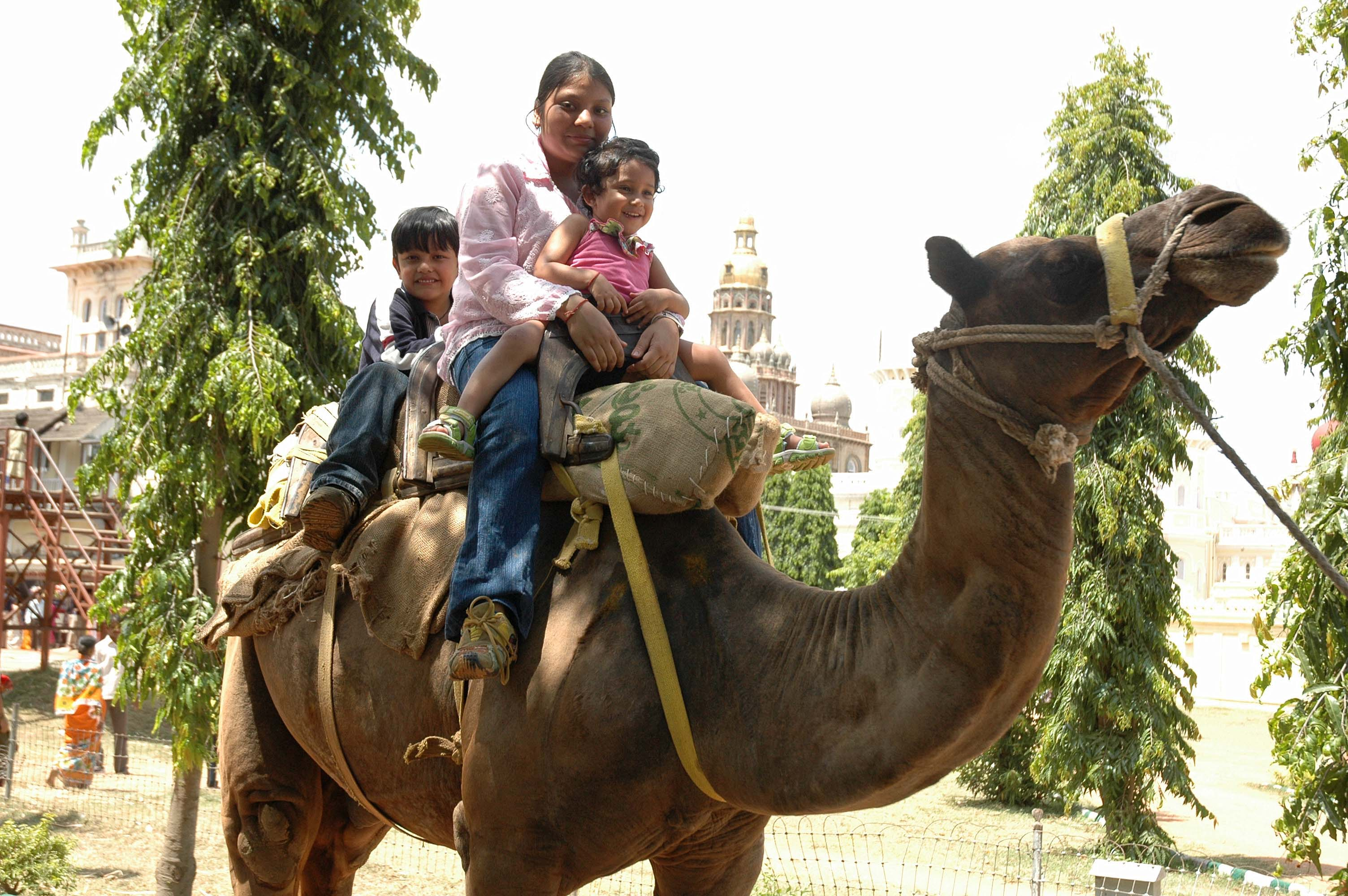 Camal ride - Mysore Palace