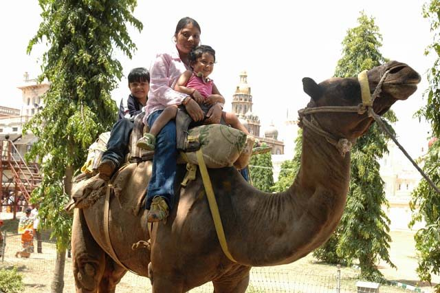 Camal ride – Mysore Palace