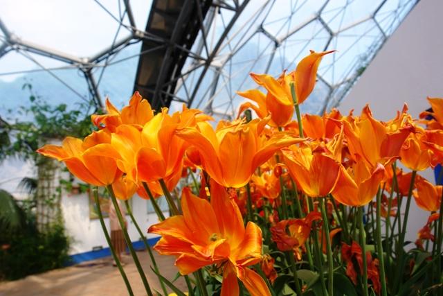 Flowers contest at Eden
