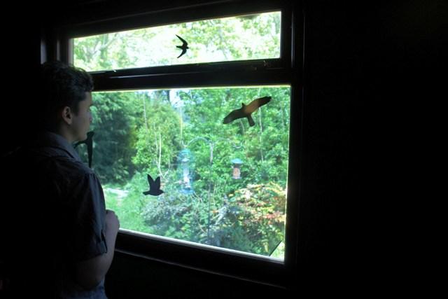 Bird-spotting