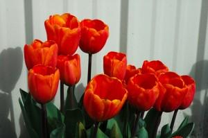 tulip-2005-trip-2