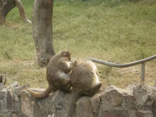 delhi-zoo10