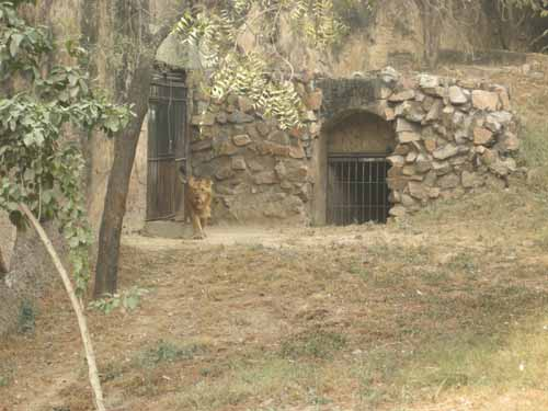 delhi-zoo11