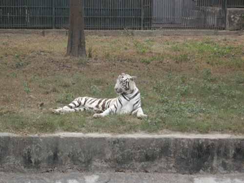 delhi-zoo13