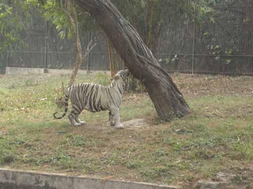 delhi-zoo6
