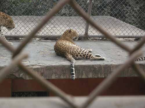 delhi-zoo7