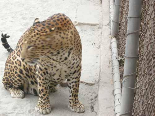 delhi-zoo8