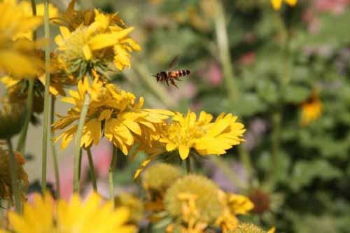 buzz-buzz