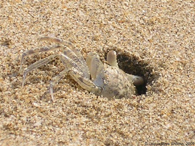 Crabspotting!