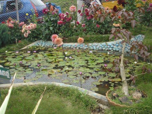 Flower Garden - 1