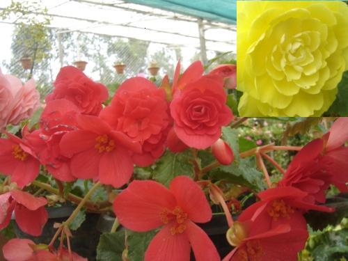 Flower Garden - 2
