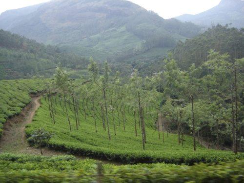 On the way to Nilgiri Tahr's home