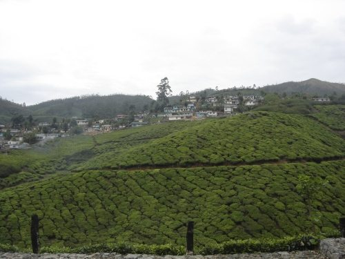 The only hill in Munnar having houses - See.... Unspoilt hill station