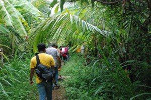 Walk in the plantation