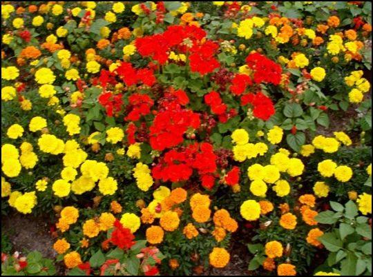 street-gardens-niagara-falls_opt