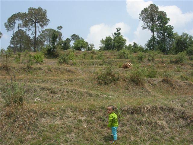 Behind KhetiKhan KMVN.. trying first lesson of Trekking?