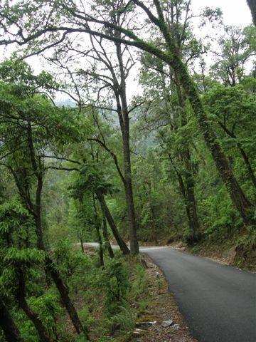 Om the way to Munsiyari from Thal