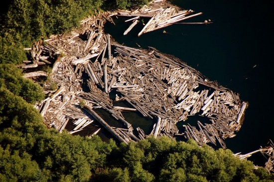 Dead tree stumps floating in the lake