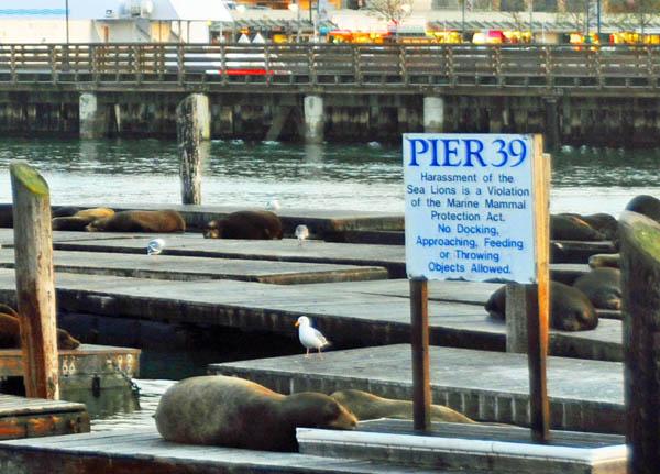 Sign, Pier 39, San Francisco, California, US