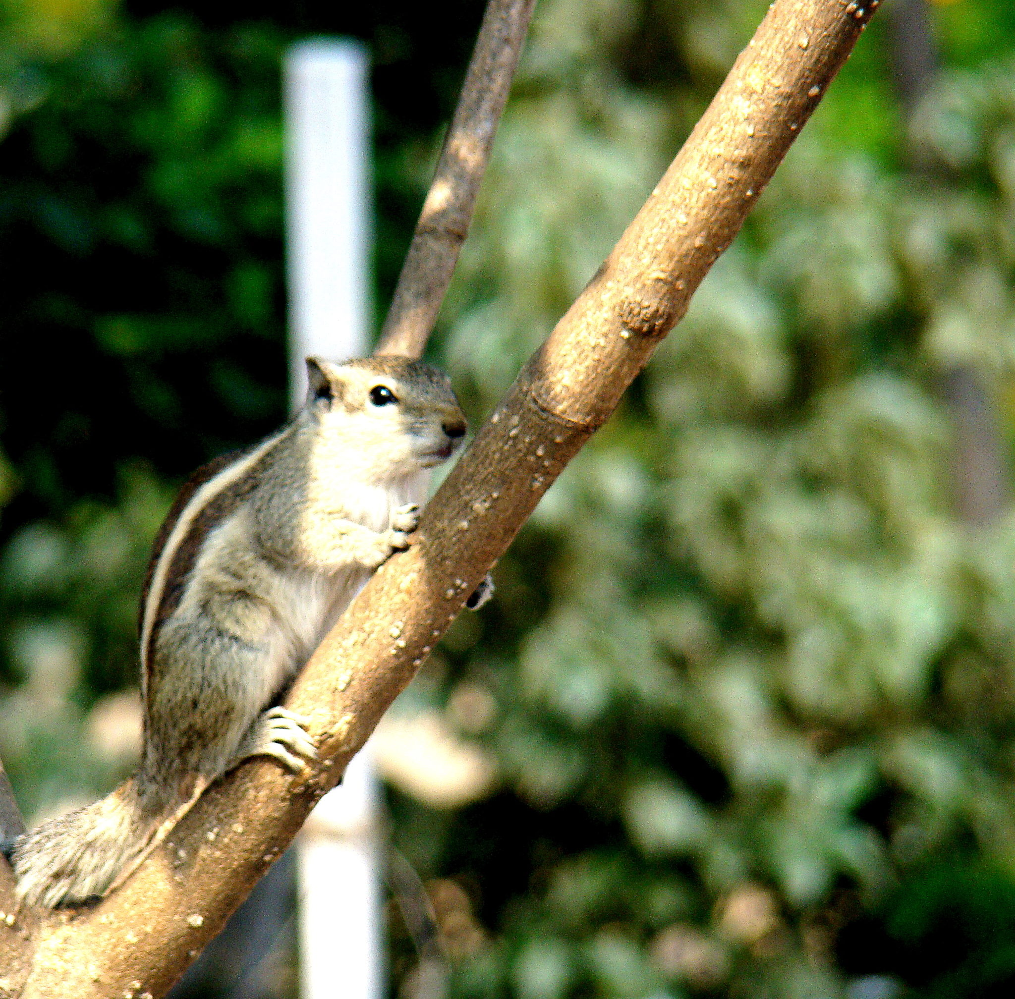 a squirrel at the resort