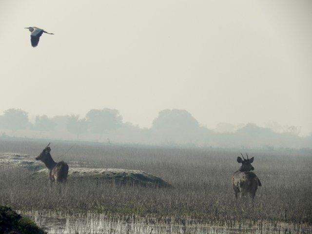 Bharatpur Bird Sanctuary photo by Nikhil Chandra