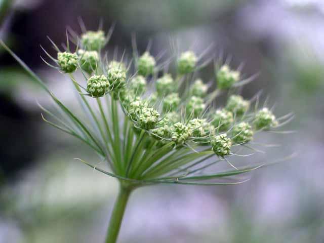 Flower Garden – Munnar