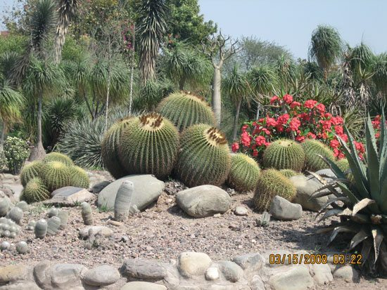 Cactus Park Courtesy - https://www.ghumakkar.com/pinjore-kalkaji-temple-cactus-garden-review/