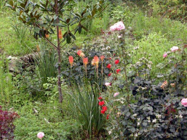 KMVN Patal Bhuvneshawar Flower Garden