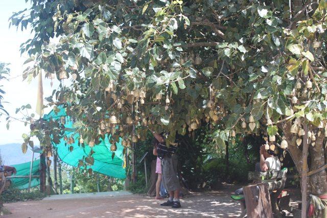 Bells on the people tree, Thai version of Mannat
