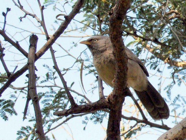 Aves at Ranthambore