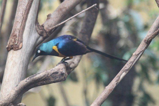 Bird Watching II