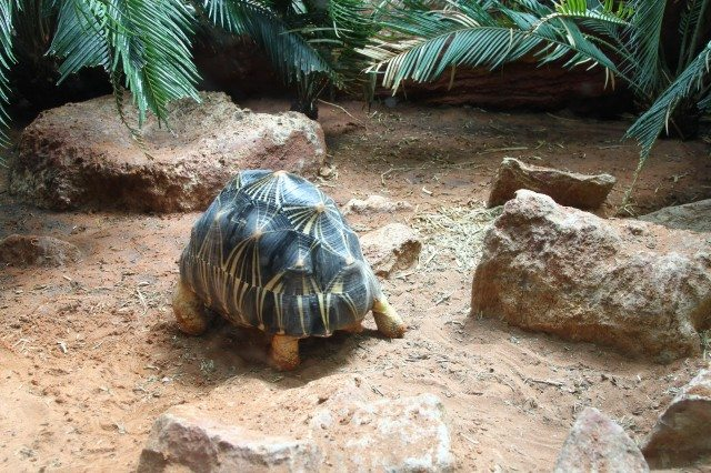 Slow Paced Turtle