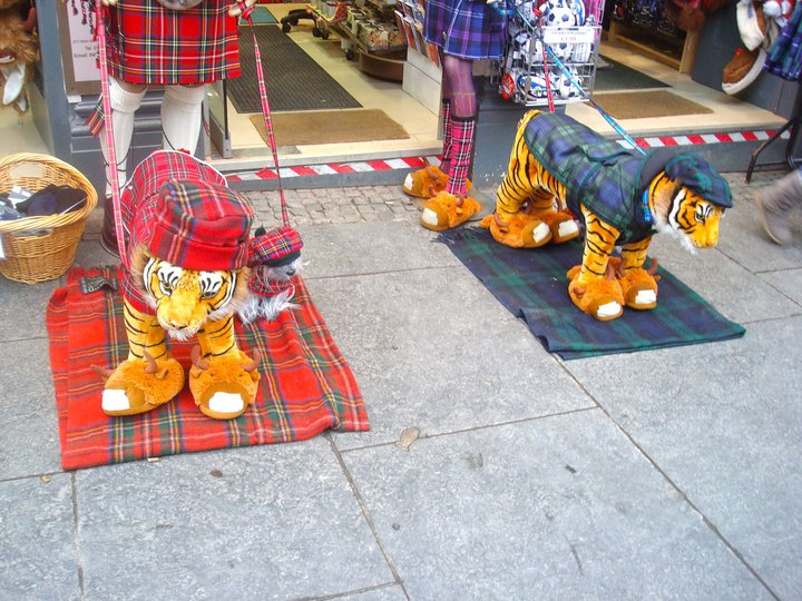 Kilted and Booted Tigers