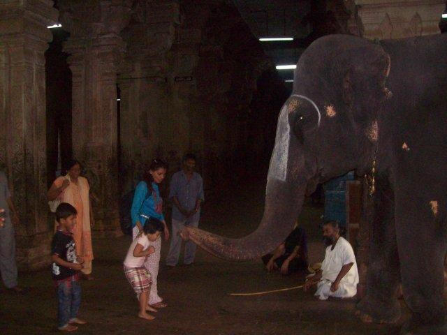Elephant in Sriranganathaswamy