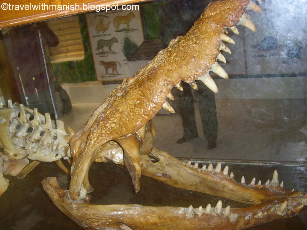 इन दाँतों के बीच अगर कुछ आ जाए तो...समझ गए ना आप :)