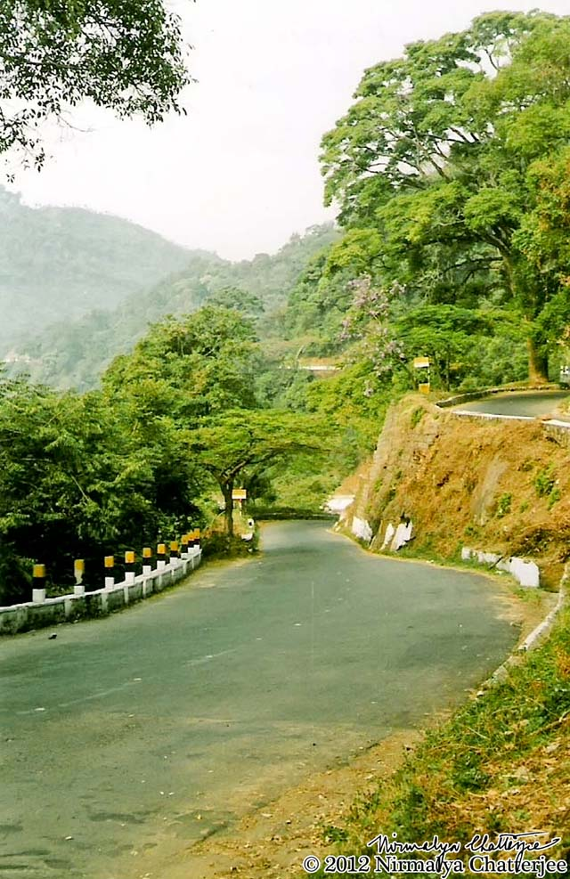 Down the Ooty-Coonnoor Road