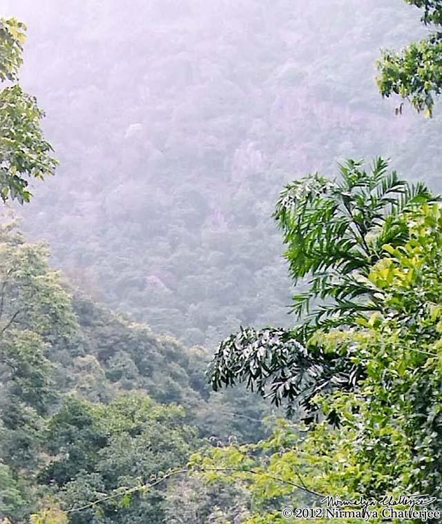 Hillside foliage 2, Mettupalayam-Ooty