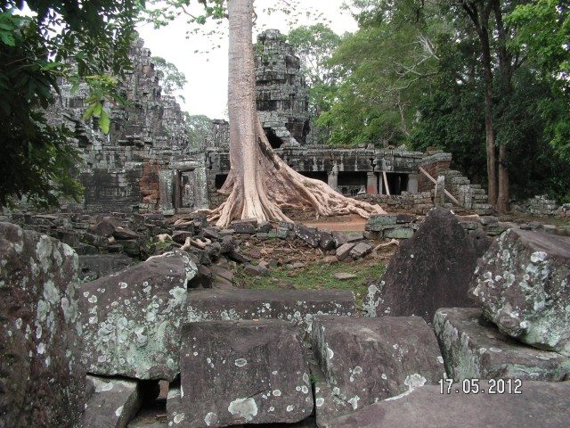 The Ta Prohm Temple with Silk-cotton trees