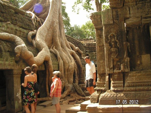 Roots of a Silk cotton trees spreading along the gallery of the second enclosure