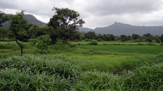 The Picture Perfect Lush & Verdant Western Ghats