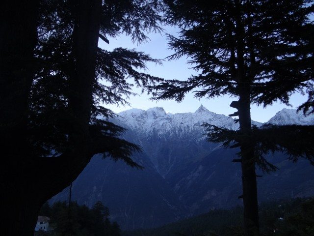 Sunrise through Deodar Trees at Kalpa