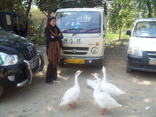 Sitamarhi , Sita Samahit Sthal : Ducks