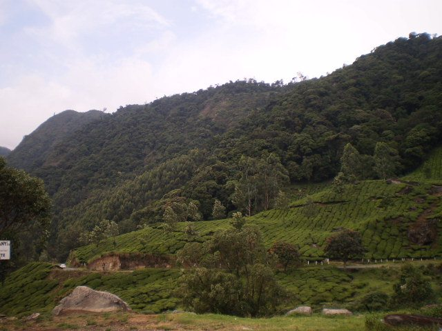 Beautiful Munnar