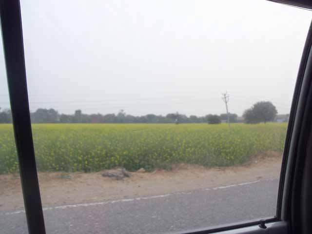On the way to jaipur