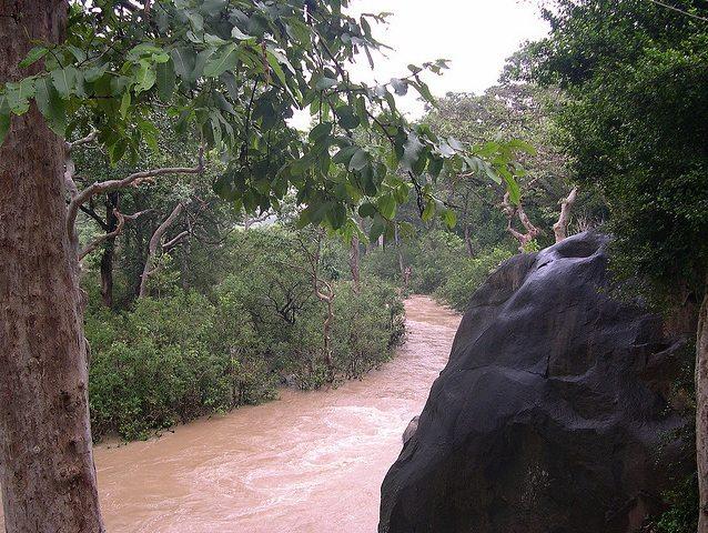 Chitrakoot Dham Woods